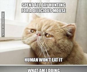 Problemy kotów pierwszego świata