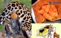 Cheetos - już wiesz co jesz