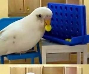 Ein Papagei, Ein Reich