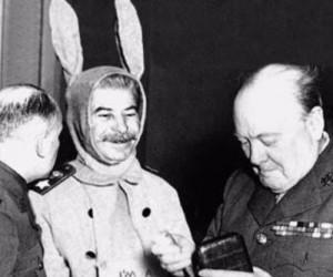 Sowiecki królik