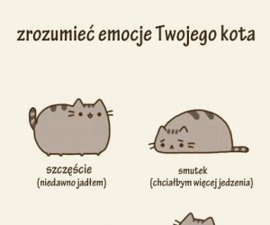 Zrozumieć emocje Twojego kota