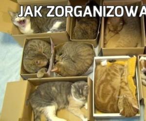 Jak zorganizować koty