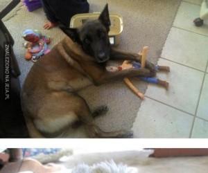 Co dziwnego robią zwierzęta, kiedy ich nie przypilnujesz