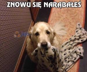 Pies zawsze o Ciebie zadba