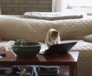 Kot przyłapany na czatowaniu w sieci