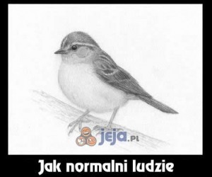 Jak rysować ptaszki