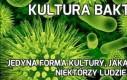 Kultura bakterii