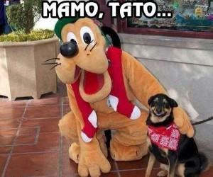 Nie chcę Cię martwić, ale to nie jest pies