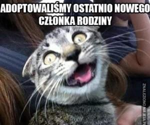 Szczęśliwy kot?