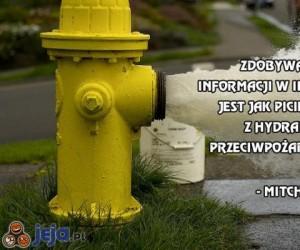 Zdobywanie informacji w internecie