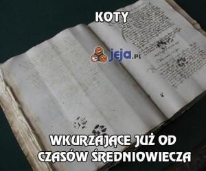 Koty i średniowieczne księgi