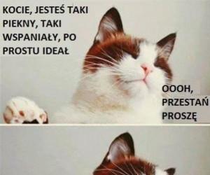 Typowe zachowanie kotów
