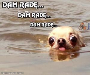 Myśli psa podczas pływania
