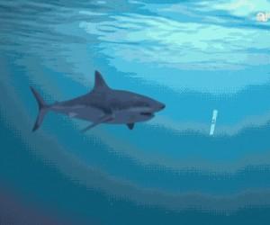 Kiedy rekin zjada Ci pracę domową, ale wiesz, że i tak nikt w to nie uwierzy