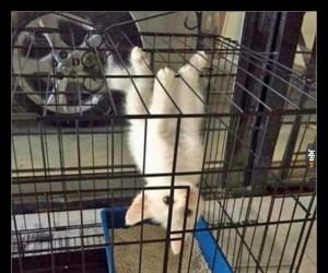 Pierwszy i ostatni raz kupuję kotu kocimiętkę