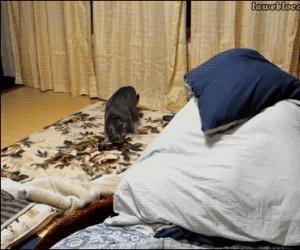 Ej, stary, poddaję się!