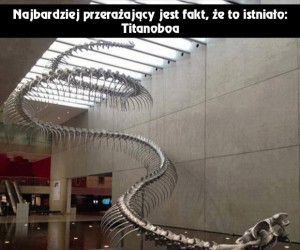 Węże kiedyś były większe