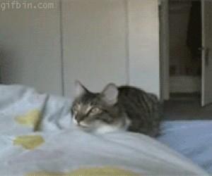 Kocie salto