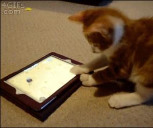 Kotek gra na iPadzie aż do zawrotu głowy
