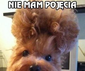Twoja fryzura mówi mi coś innego