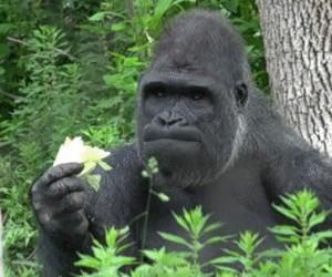 Gdy jem sałatkę