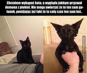 Chciałem wykąpać kota...