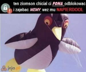 Z pingwinami nie ma żartów
