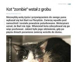 To początek apokalipsy zombie?