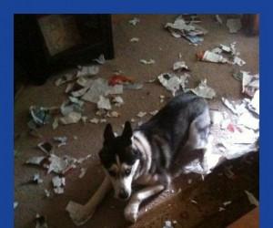 Porwałem ci gazetę