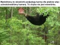 Spory ten wiewiór