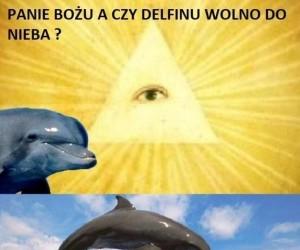 Delfin idzie prosto do czyśćca