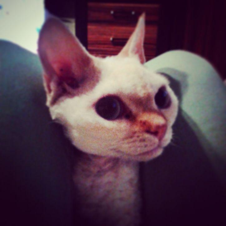 Koteł 2