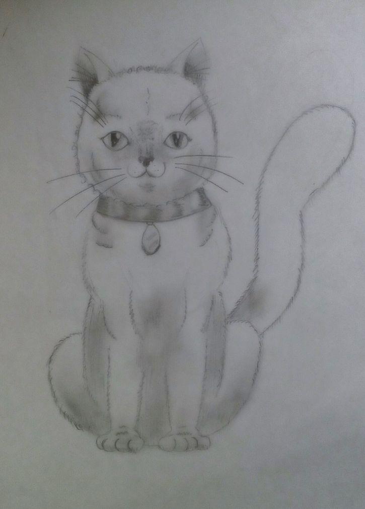 Jakiś kot (ok. 2011)