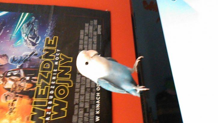 Moja papużka
