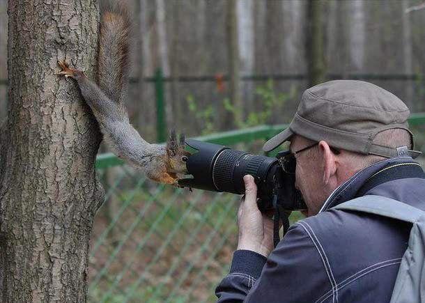 Ciekawska wiewiórka