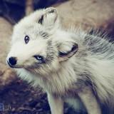 Avatar White_Fox