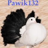 Avatar Pawik132