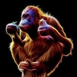Avatar Napalony_Orangutan_Alfa