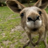 Avatar KangarooPL