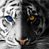 Avatar Briar_Beauty