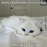 Avatar jakuxd24