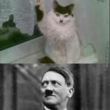 Avatar AdolfKitler
