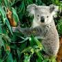 Avatar koala44