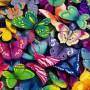 Avatar Butterfly__