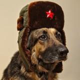 Avatar taki_tam_sowiecki_pies