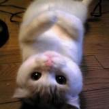 Avatar Kitten765