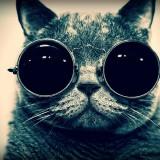 Avatar Cool_Cat