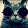 Avatar Cool_Cat