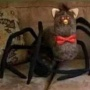 Avatar WarriorsCatsPolishFan