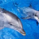 Avatar delfin2